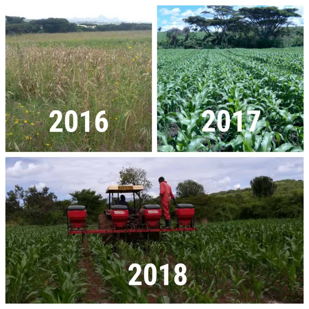 maize farming success stories