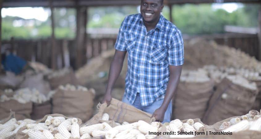 Kenya Post Harvest Losses Statistics