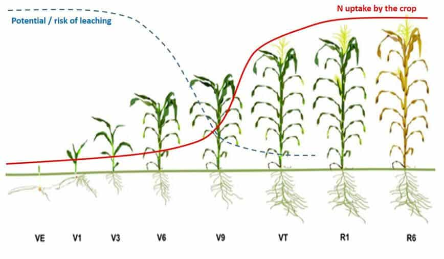 when to apply urea topdressing fertilizer for maize