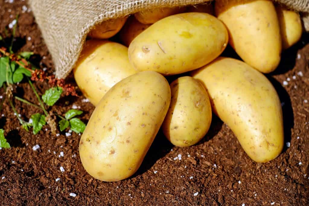 Starter Guide To Profitable Potato Farming