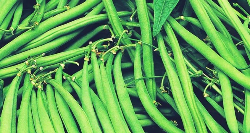French Beans Farming Guide