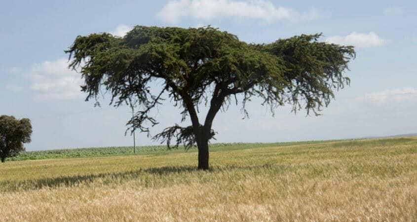 Hugo Wood Wheat Farming In Kenya Story