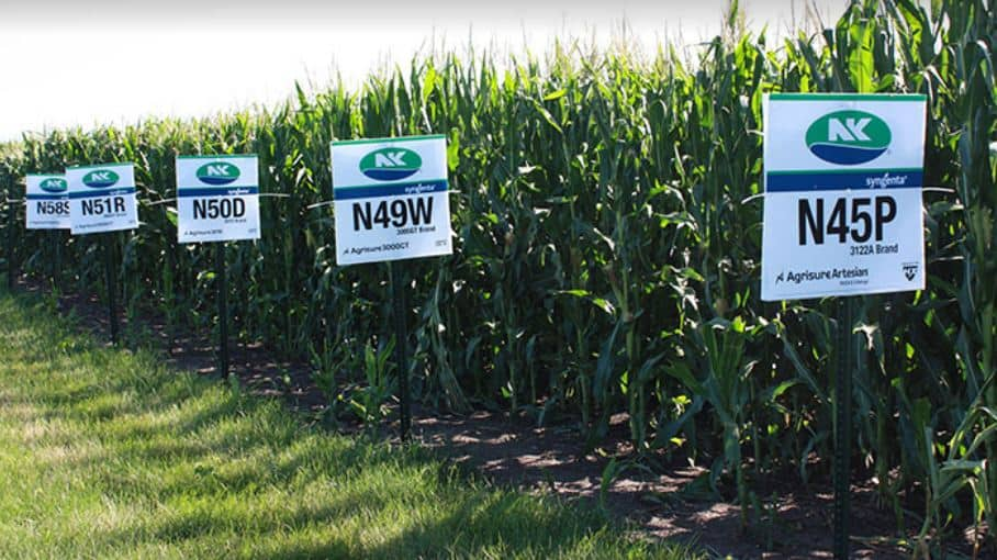 control of fall army worm genetically modified maize