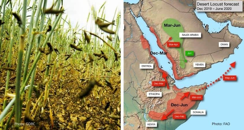 Kenya Locust Situation Update [Jan/Feb 2020]