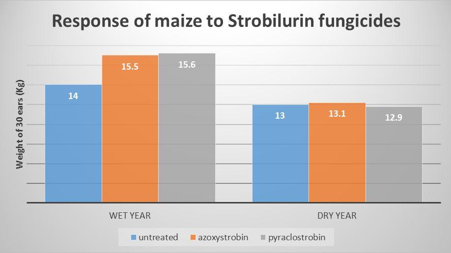 azoxystrobin strobilurin fungicides