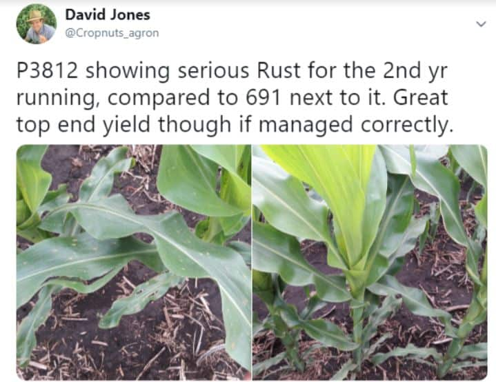 best fungicide for corn maize at tassel