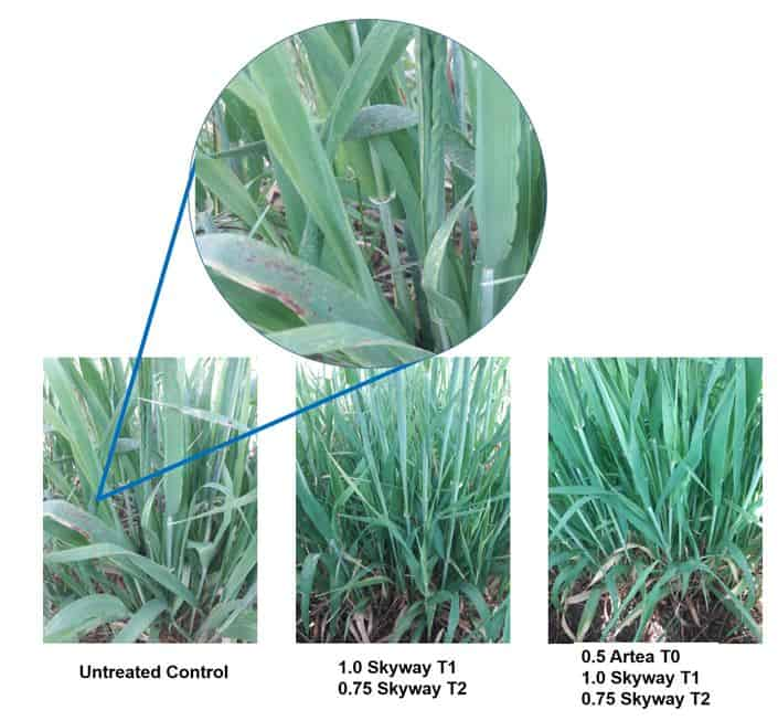 fungicides for wheat barley crop