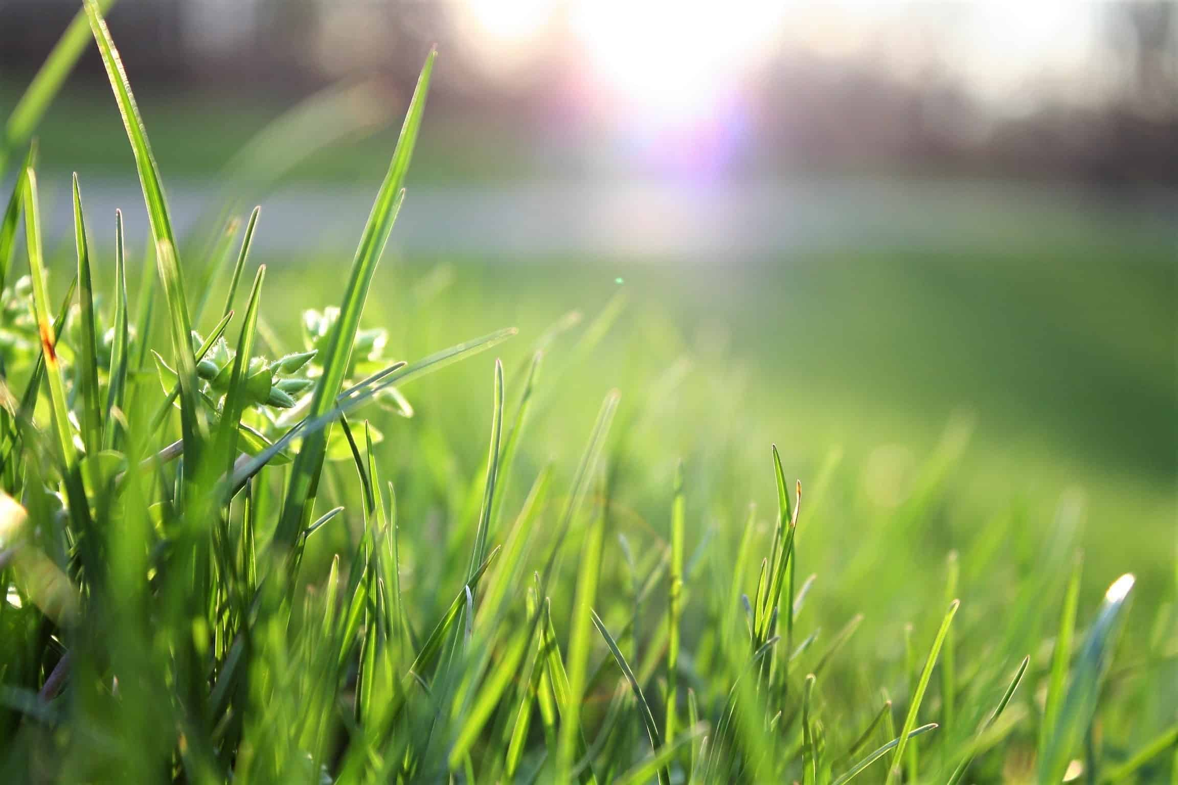 How Organic Matter Creates Sustainable, Carbon-Friendly Agriculture