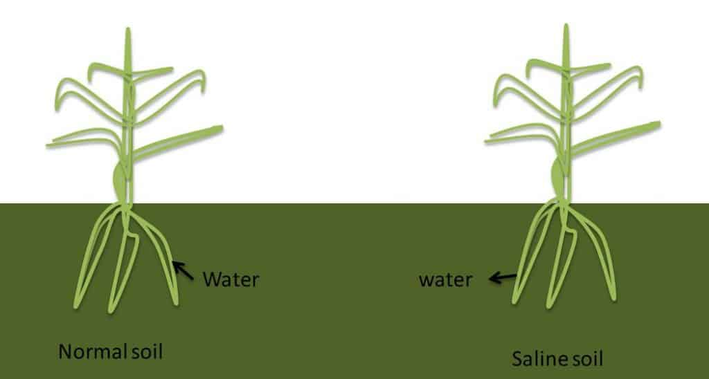 soil salinity effect on agriculture