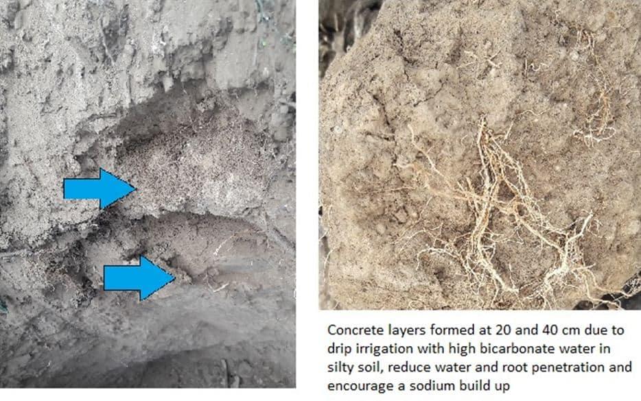 soil salinity solutions
