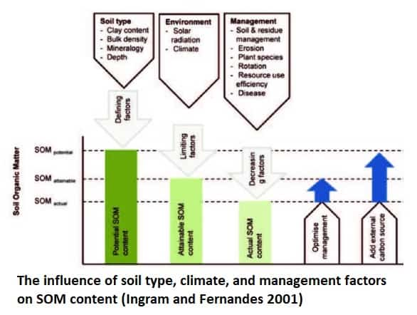 factors affecting soil organic matter