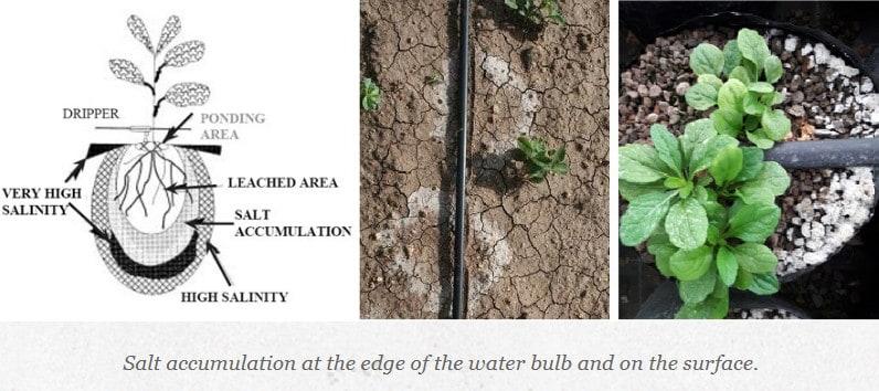 liquid fertilizer through drip irrigation