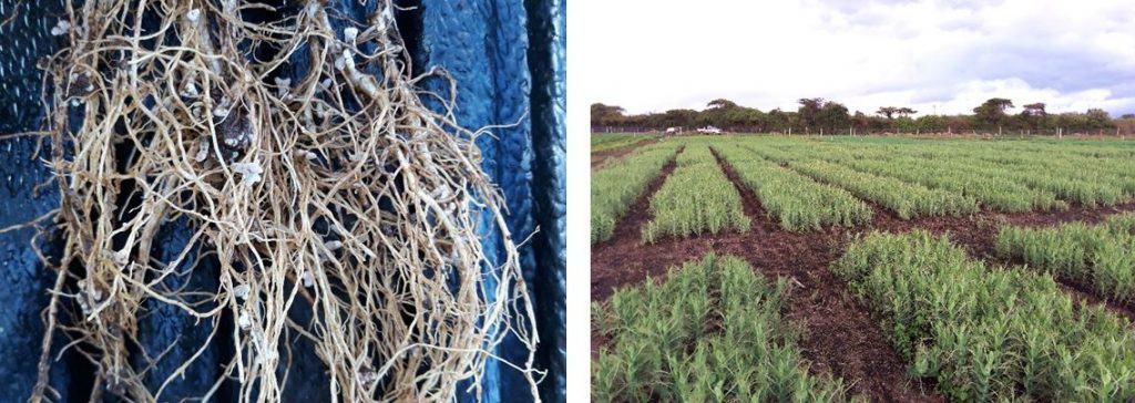 nutrition crop field trials