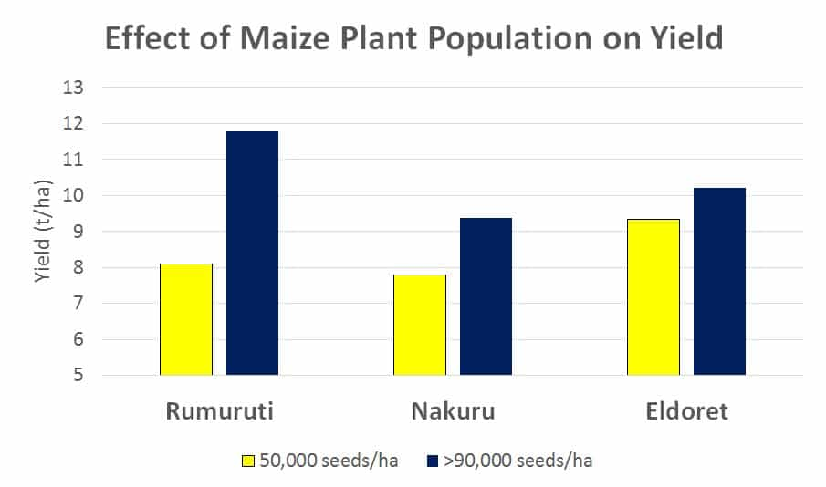 effect of spacing on maize yield corn plant population
