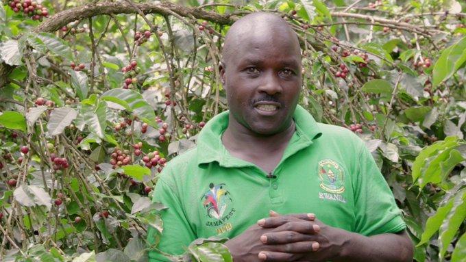 Coffee yield farming practices fertilizer