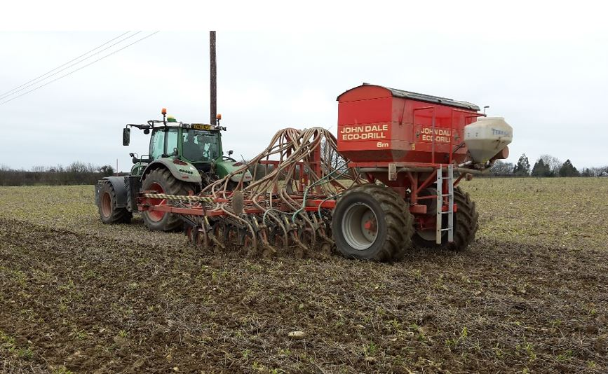 maize wheat barley planting